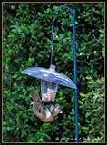 images of Bird Feeder Hood
