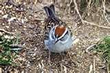 images of Bird Feeders New Brunswick