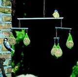 Bird Feeders Tiny Birds pictures
