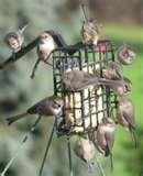 Bird Feeder Type Food pictures