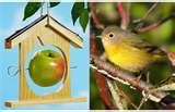 photos of Bird Feeder Mp3