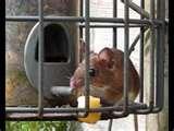 Bird Feeder Mice