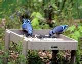 images of Bird Feeders Tiny Birds