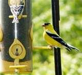 pictures of Bird Feeders Tiny Birds