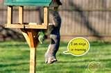 images of Bird Feeder Mice