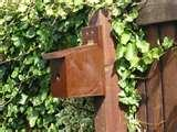 Bird Feeders Nesting Boxes pictures