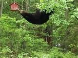 pictures of Bird Feeder Black