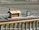 Bird Feeder Birds Identify