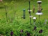 Bird Feeder Birds Identify photos