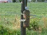 images of Bird Feeders To Make With Kids