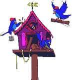 Bird Feeders Avian Flu