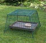pictures of Bird Feeders Guardian