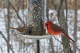 images of Bird Feeder Birds Identify