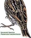 pictures of Bird Feeders Avian Flu