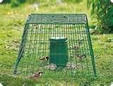 images of Bird Feeders Guardian