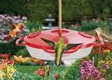 photos of Bird Feeders Plus