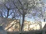 Bird Feeders Oklahoma City pictures
