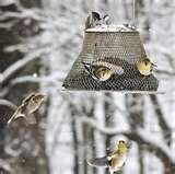 photos of Bird Feeder American