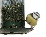 Bird Feeders Effect On Birds