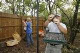 Bird Feeders Oklahoma City images