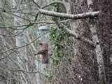 images of Rspb Bird Feeders Make