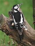 Bird Feeders Woodpeckers images