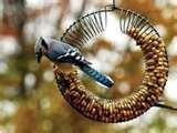 pictures of Bird Feeder Wreath