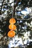 images of Hanging Bird Feeders From Trees