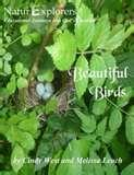 photos of Bird Feeders Experiment