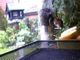 Bird Feeders Experiment images