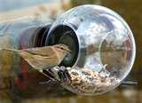 Bird Feeder Globe