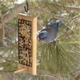 Bird Feeder With Peanut Butter pictures