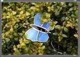 images of Bird Feeders Dragonflies
