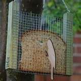 photos of Bird Feeder Recommendations