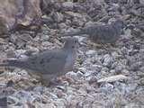 photos of Bird Feeders Scottsdale