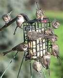pictures of Bird Feeders With Cages