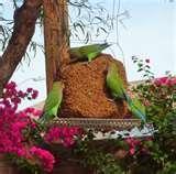 images of Bird Feeders Scottsdale