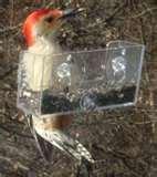 Bird Feeders Feedback images