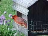 pictures of Bird Feeders Feedback