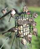 Bird Feeders With Cages photos