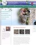 pictures of Bird Feeders 76109