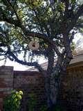 Knox Gelatin Bird Feeder images