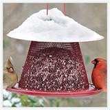 Bird Feeder Issues