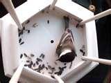 pictures of Bird Feeder Nest