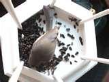 Bird Feeder Nest photos