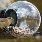photos of Bird Feeder Born In Sweden