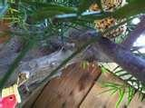 Knox Gelatin Bird Feeder pictures