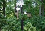 Bird Feeder Raccoon pictures