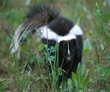 Bird Feeders Alpharetta images