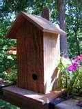 Bird Feeder Wren photos